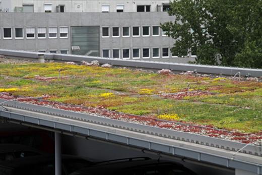 Carport Dachbegrünung