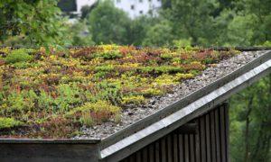 Dachbegrünung © Martina Berg, fotolia.com